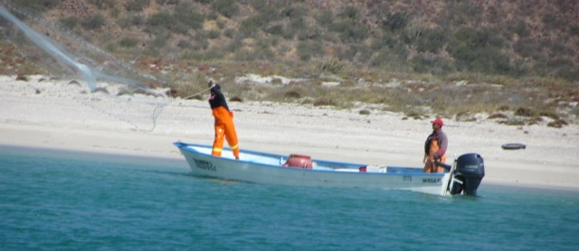 Pangueros bait-fishing at Bahia Salinas.